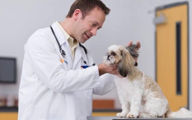 Boehringer Ingelheim, i farmaci veterinari trainano la crescita del fatturato nel primo semestre 2017