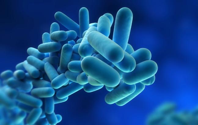Lactobacillus paracasei CBA L74: nuove evidenze anti-infiammatorie