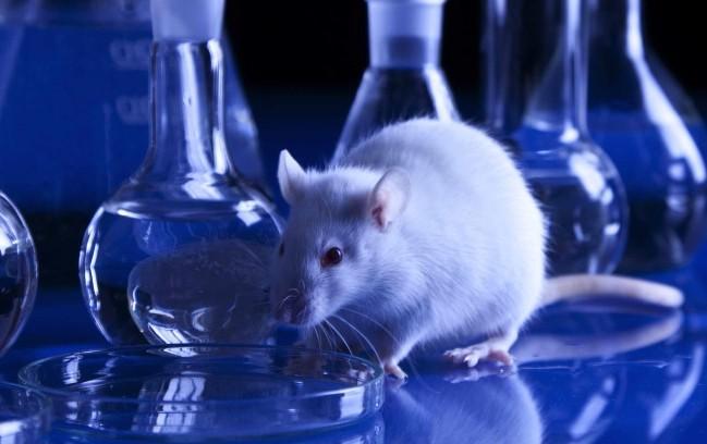 Sperimentazione animale: l'Italia rischia di rimanere al palo