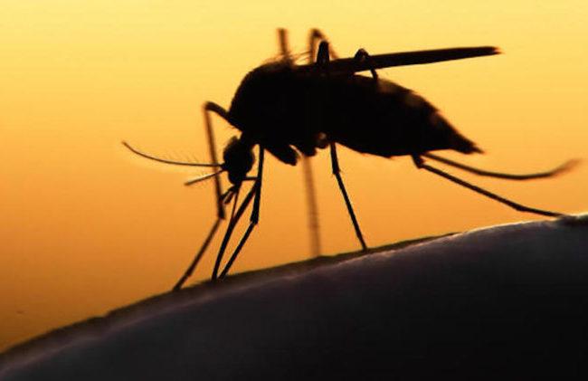 Virus Zika, Fda approva l'autorizzazione all'uso di emergenza per un test di Diasorin