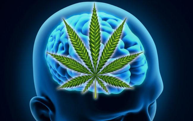 Epilessia farmaco-resistente: studio RiMED, Umberto I e Università Amsterdam su efficacia cannabis
