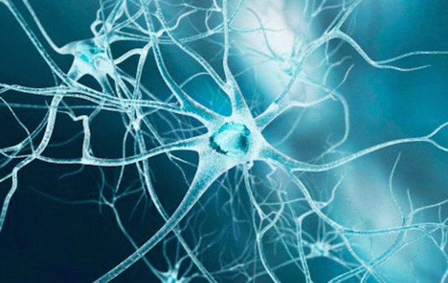 Le meningi sono una fonte di nuovi neuroni per il cervello