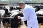 Controlli veterinari ufficiali, le nuove regole Ue spaventano i produttori