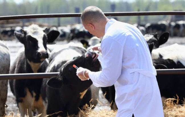Se i farmaci veterinari costano 10 volte di più di quelli umani