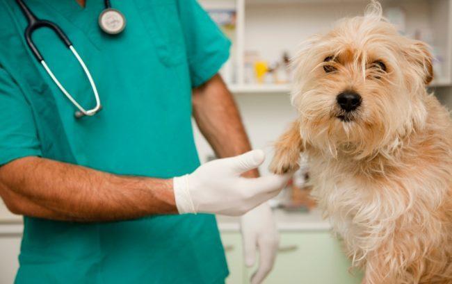 Veterinari e tamponi per Covid: i professionisti della salute animale sono pronti, ma con delle regole