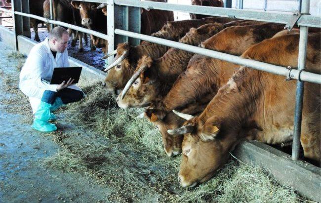 Prezzi dei medicinali veterinari alle stelle, Codici scrive ad Antitrust