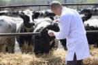 Farmaci veterinari, Carmelo Lombardo nuovo ad di Zoetis Italia