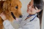Farmaci veterinari, ecco il decreto per la sorveglianza postmarketing