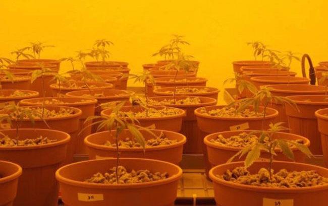 L'istituto farmaceutico militare è pronto a triplicare la produzione di cannabis