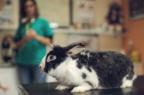 La fronda antivax si estende agli animali