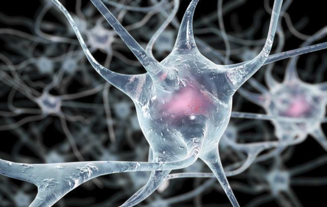 Parere positivo del Chmp per ocrelizumab contro forme gravi di sclerosi multipla
