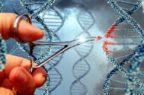 Sperimentata terapia genica per la mucopolisaccaridosi di tipo 6