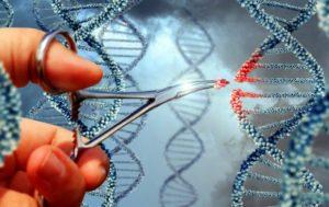 terapia genica per la mucopolisaccaridosi di tipo 6