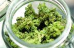 """Cannabis terapeutica: """"Dati ancora insufficienti su sicurezza ed efficacia"""""""