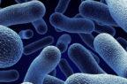 Scoperte le malacidine, una nuova classe di antibiotici
