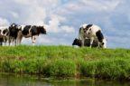 Impatto di Covid-19 per gli allevatori: troppi rallentamenti su vendita e acquisti dei prodotti