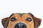 Con la ricetta elettronica veterinaria dati reali e un uso più razionale dei farmaci