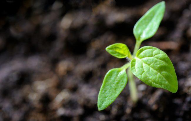 Tra crispr e ogm l'Europa s'interroga sulle piante modificate