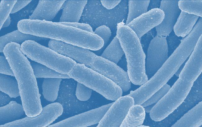 """Biologia sintetica, in sperimentazione i """"farmaci viventi"""" per trattare la fenilchetonuria"""