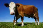 Farmaci veterinari, Parlamento Ue approva il nuovo regolamento