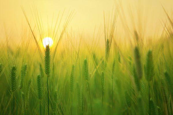 Mercato dell'Agritech, previsioni sempre in crescita
