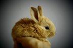 Sostituibilità farmaci veterinari, possibile anche con importazione parallela
