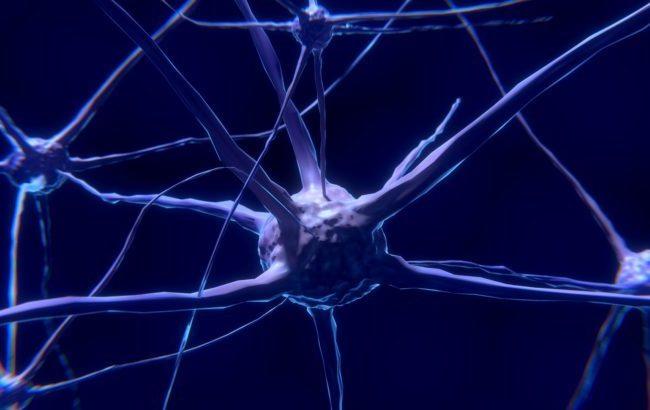 """Staminali contro la Sla, i neurologi: """"Ricerca in fermento, ma ancora pochi risultati clinici"""""""