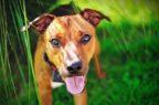 L'effetto placebo riguarda anche gli animali, ma può subire l'influenza dei caregiver