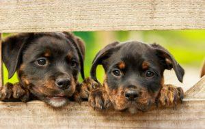 scommettere sulla pet economy