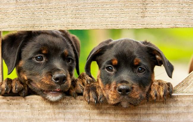 Il traffico illegale di cuccioli si combatte anche sul web