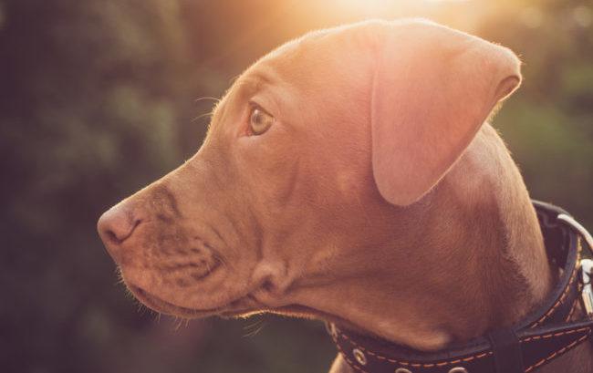 Farmaci veterinari: nel 2019 Ema ne ha approvati 15