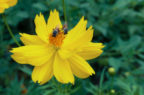 Entomoterapia: dalle api alle larve, le molecole di insetti utili in clinica