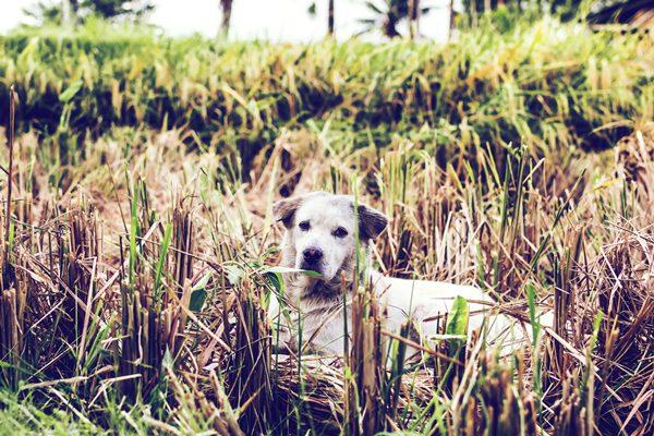 Randagismo e zoonosi, pochi dati e raccolti male non aiutano la prevenzione