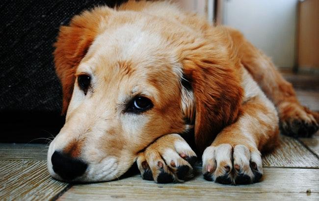 """Prendersi cura degli animali da compagnia: nel futuro sempre più """"pet technology"""""""