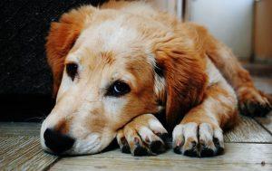 effetti collaterali dei farmaci veterinari