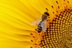 Veterinaria: in dieci anni via libera Ue a 22 nuovi farmaci per usi e specie minori