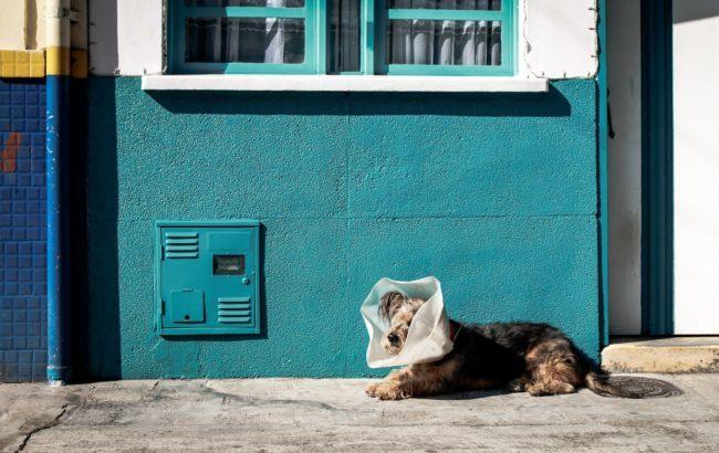 Covid-19: come garantire un alto livello di sicurezza nelle strutture veterinarie