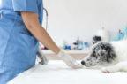 Telemedicina veterinaria, una riflessione in otto punti di Anmvi