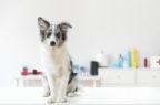 Farmaci veterinari, il Cvmp approva un nuovo utilizzo per tre antiparassitari