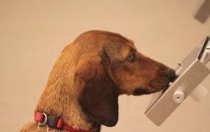 se il fiuto dei cani