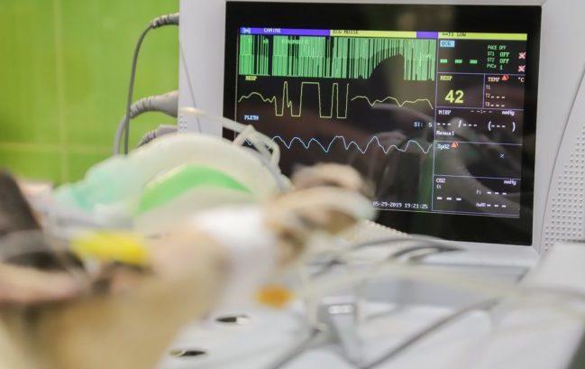 Dispositivi medici veterinari: serve uno sforzo per armonizzare le regole