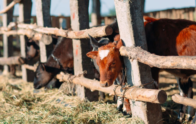 Assalzoo, su sanità animale va semplificata la legislazione