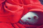 Sperimentazione animale: Campus Biomedico aderisce alla rete che promuove metodi alternativi