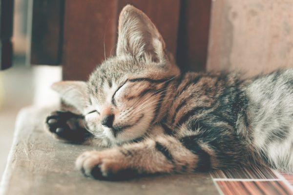 Lyssavirus, linee guida per i veterinari liberi professionisti