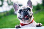 Comitato farmaci veterinari Ema, due nuovi pareri positivi