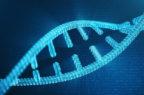 Studiare i geni per comprendere la variabilità di Covid-19