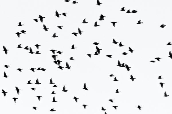 Aviaria in Europa, pochi casi in Italia ma attenzione alla Germania