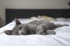 Cvmp, approvato il primo anticorpo monoclonale per gatti