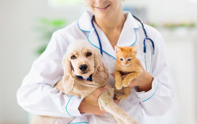 Medicinali per uso veterinario, da Ue ok alla domanda di immissione in commercio per tre farmaci
