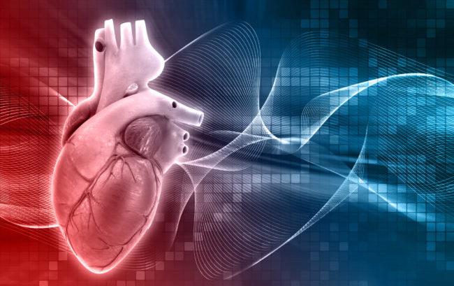 Nasce la startup Oloker per curare l'ischemia cardiaca con le terapie cellulari